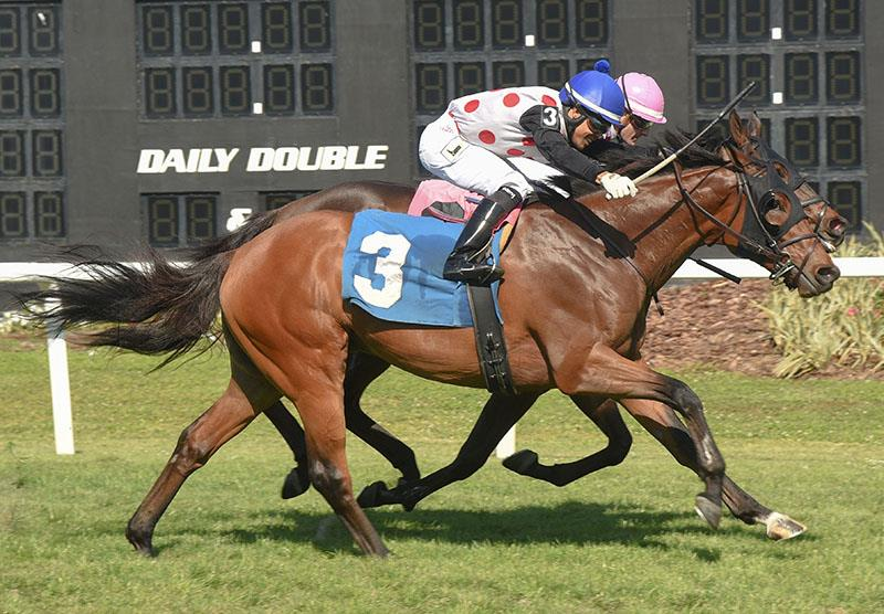 He's Bankable gets the money in the Sophomore Turf S  -